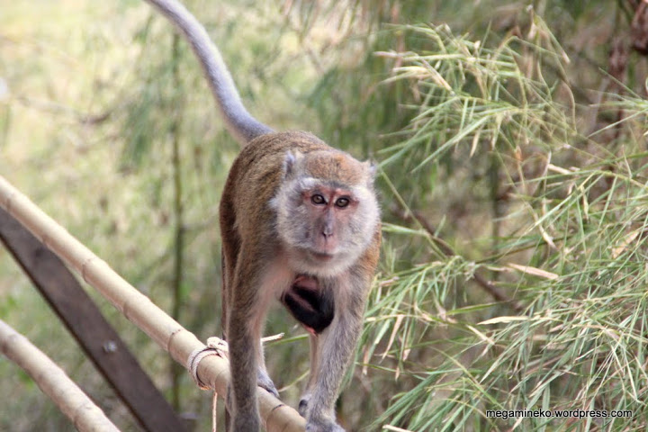 monkey trail monos 2